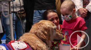 El Hospital 12 de Octubre inicia una terapia asistida con perros