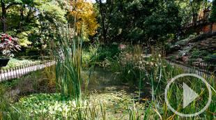 En el Día Mundial del Árbol, que mejor propuesta que darse un paseo por el Jardín Botánico
