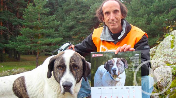 El calendario solidario de El Refugio anima a adoptar perros mayores