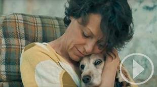 El Refugio activa un plan para acoger perros de afectados por el Covid 19