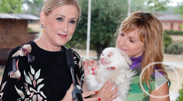 La Comunidad de Madrid se implica contra el abandono de animales en verano