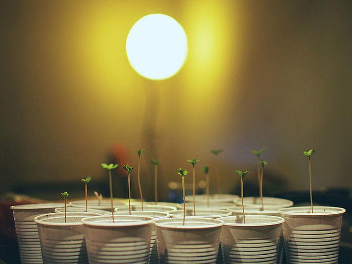 ¿Cuáles son los pasos para iniciarse en el cultivo del cannabis? Brotes Verdes los explica