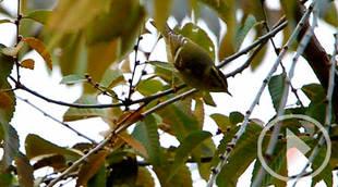 El pájaro que viaja desde Siberia y hace escala en Valdebebas
