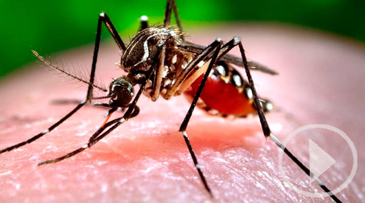 Los mosquitos ya se pueden controlar desde el móvil