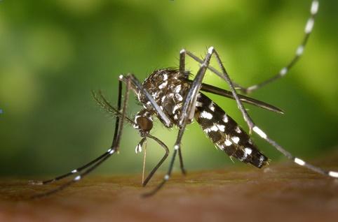 Una compañía lanza mapas inteligentes para combatir el mosquito tigre en Madrid