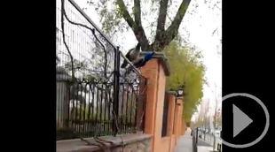 Los pavos reales hambrientos saltan la valla de El Retiro