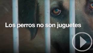 Los animales no son juguetes, cuídalos toda su vida