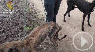 Seprona rescata cinco perros en malas condiciones