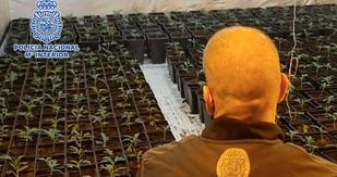 Plantación 'indoor' de marihuana en Mejorada del Campo