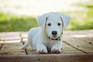 La importancia de elegir un pienso adecuado para nuestras mascotas