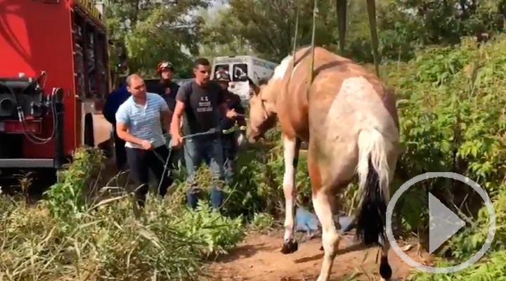 Bomberos rescata un caballo en Mejorada del Campo