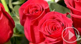 Las rosas, las flores que más se regalan en San Valentín