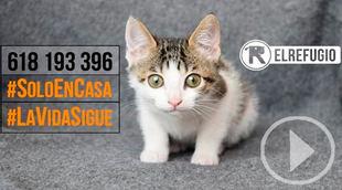 El Refugio ayudará también a los gatos de afectados por Covid-19