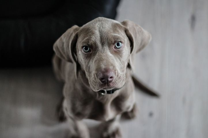 Cuáles son los mejores suplementos vitamínicos para perros