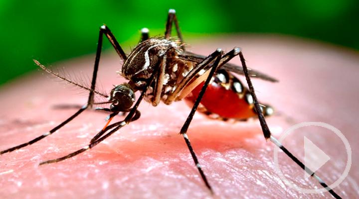 El zumbido de los mosquitos, lo más odiado del verano