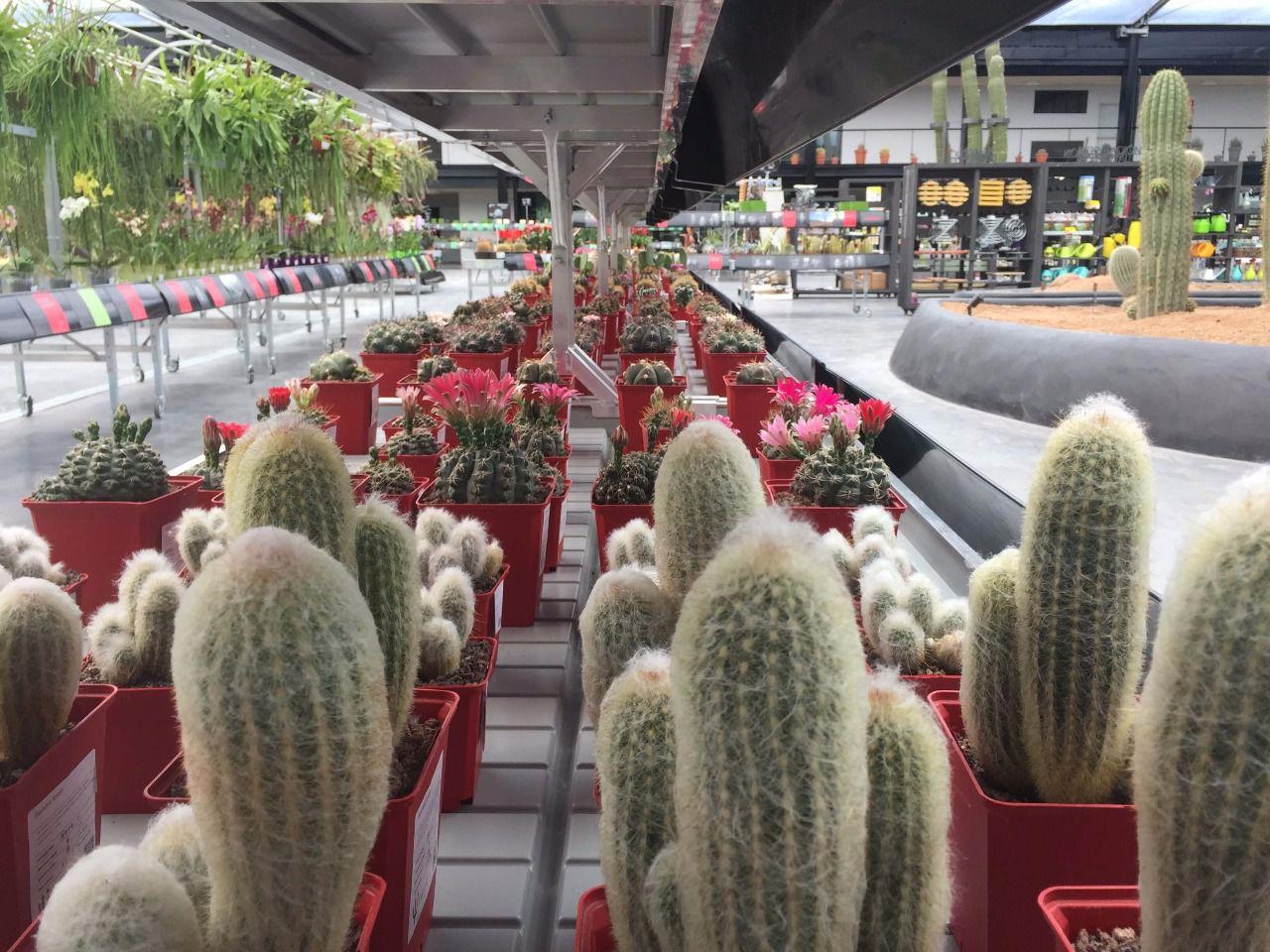 El oasis de cactus m s grande de europa a un paso de for Vivero alcobendas